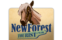 New Forest Tourist