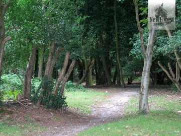 Woodland approach to Burley