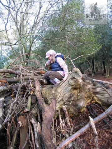 Climbing trees in Hinchelsea Wood