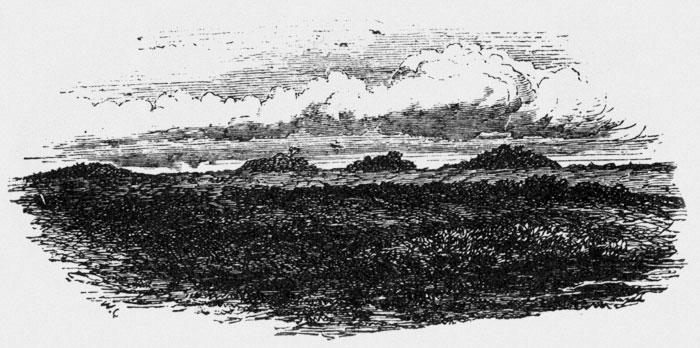 Barrows on Beaulieu Heath
