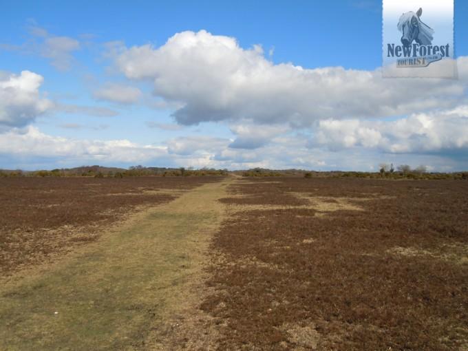 Grassy Plain near Fritham
