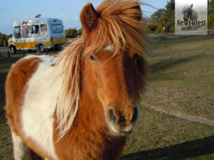 Another terrifying New Forest Pony at Hatchet Pond