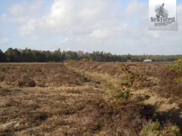 Ancient linear earthworks: Cerdic's Bridgehead