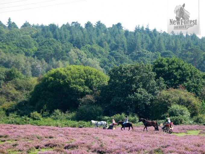 Ponies and traps near Longslade Bottom
