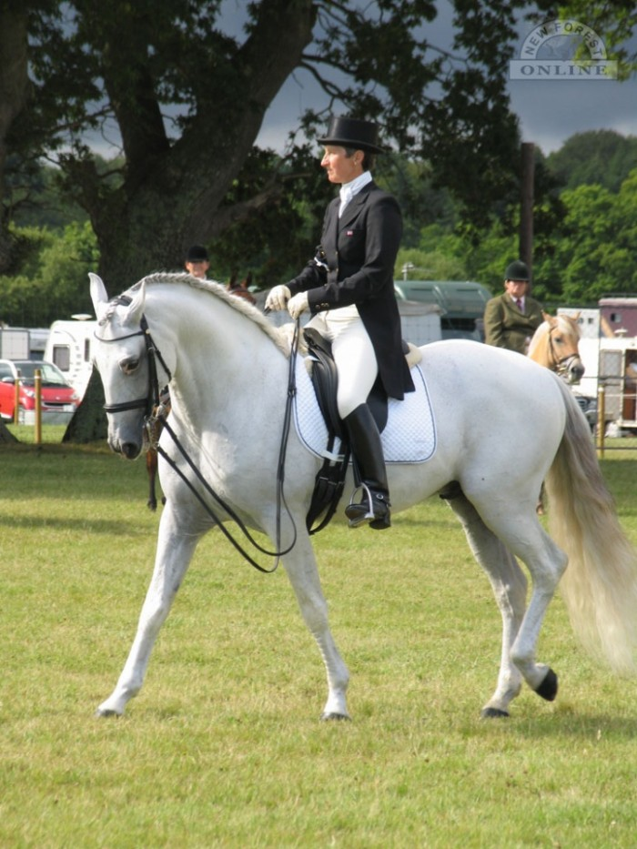 Dressage at the New Forest Show