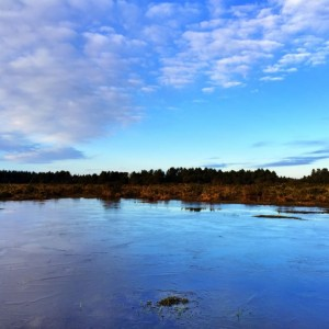 New Forest Winter Sky